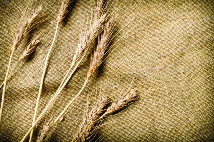 Vegetale e ignifuga, è la rivoluzione dei tessuti