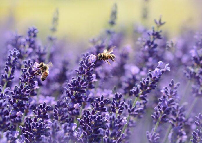Mini droni impollinatori al posto di api e farfalle