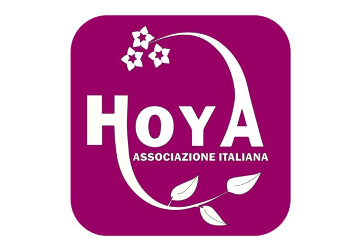 Associazione Italiana Hoya, passione vera