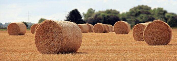 Italia contadina, anima agricola