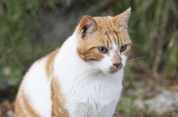La Casetta dei Gatti, un rifugio d'amore per