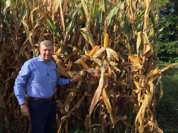 Combimais: un futuro alla coltivazione del mais