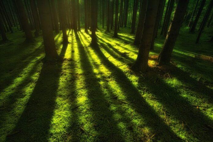 Foreste, AIAB e Purproject insieme per la riforestazione italiana