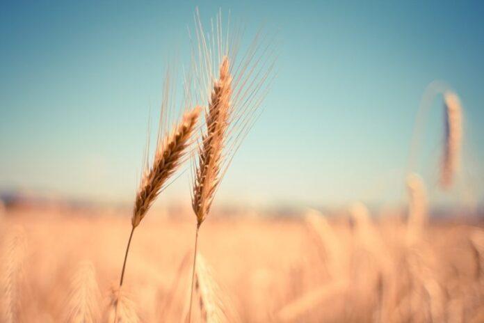 #Fridayforfuture, anche l'agricoltura biologica si mobilita per il clima