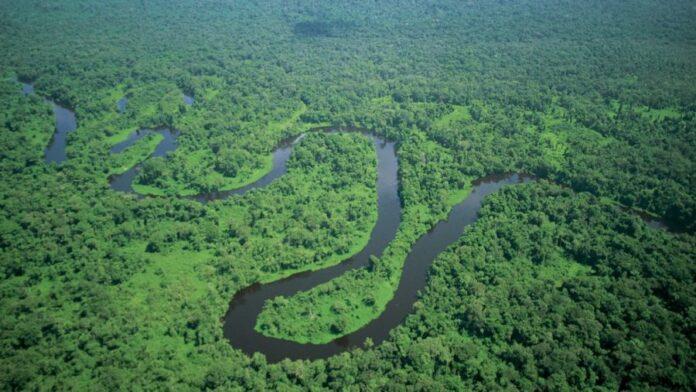 Il Sinodo per l'Amazzonia, attenzione e rispetto dal WWF