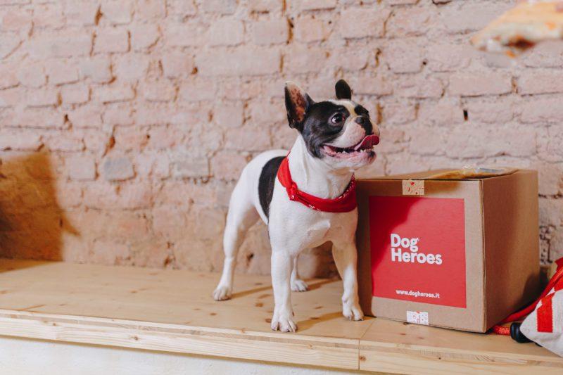 Dog Heroes, piatti scelti a domicilio per i nostri amici pelosi