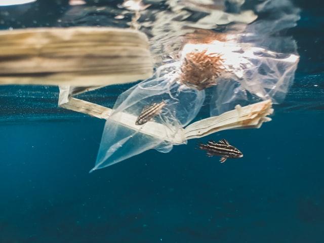 Ha origine in mare una nuova plastica biodegradabile