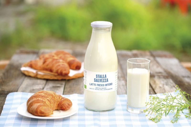 Latte vacca grigia