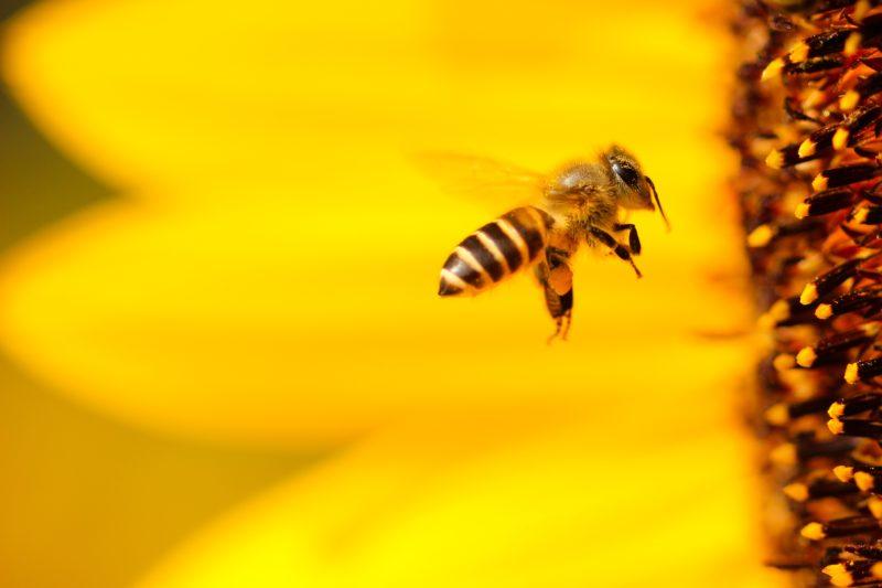 Pesticidi, parte oggi la campagna ICE a tutela della biodiversità