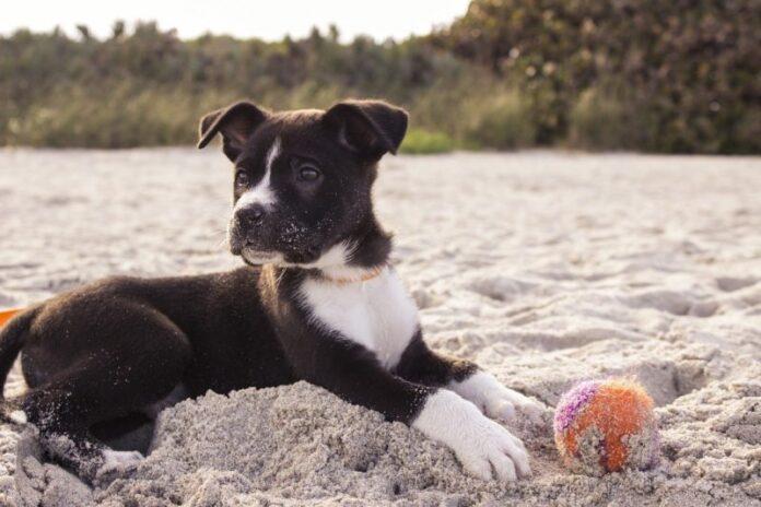 6 idee pratiche su come mantenere in forma il tuo cane
