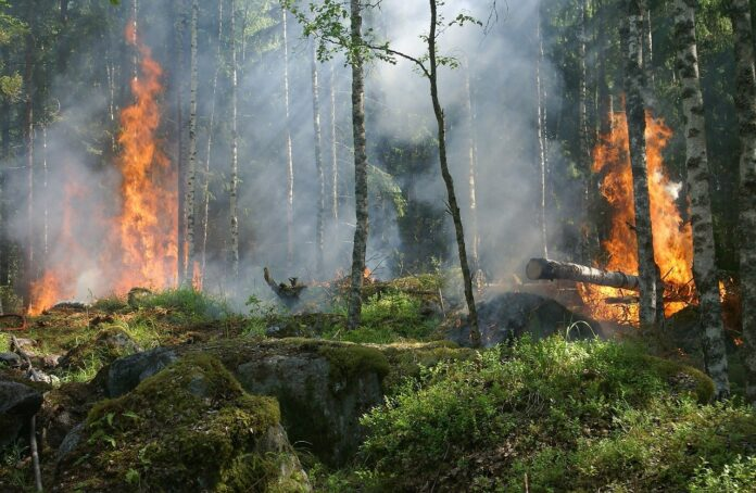 Incendi in Australia: che cosa sta succedendo? Il commento dello scienziato Giorgio Vacchiano
