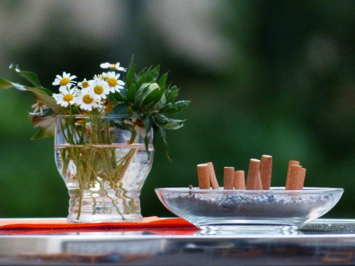Fiori dalle sigarette: i mozziconi basi biodegradabili per le piante