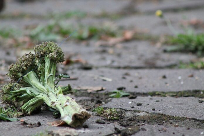 Progetto Buon Fine, l'impegno Coop contro lo spreco alimentare