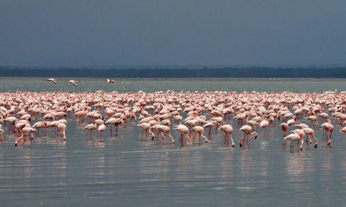World Wetlands Day, domani 2 febbraio la Giornata mondiale delle zone umide