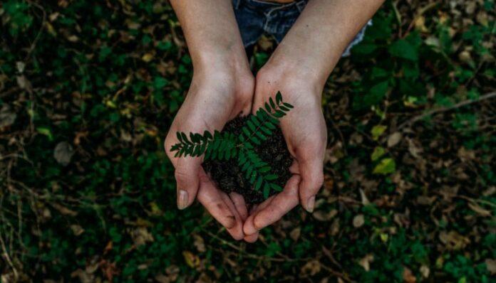 Sostenibilità e atteggiamento green: i risultati di due ricerche