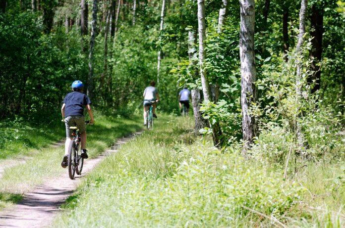 Rapporto PEFC 2019: foreste italiane certificate e sostenibili