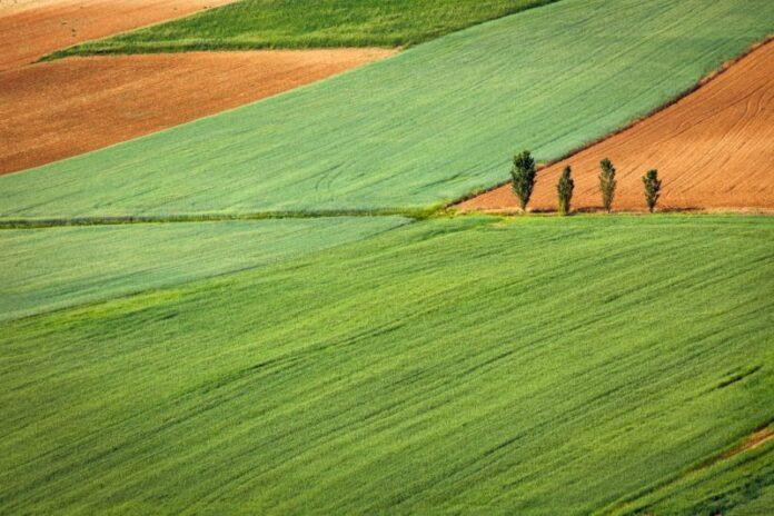 Politica agricola, appello di scienziati e associazioni per riformare la PAC