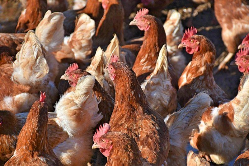 Stop ai fondi pubblici per l'agricoltura e per gli allevamenti intensivi