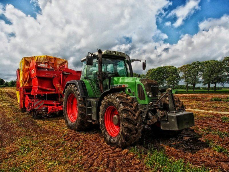 Etichetta Ue per il benessere animale, no agli allevamenti intensivi