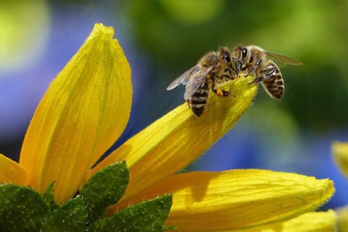 Save the queen nella Giornata mondiale delle api