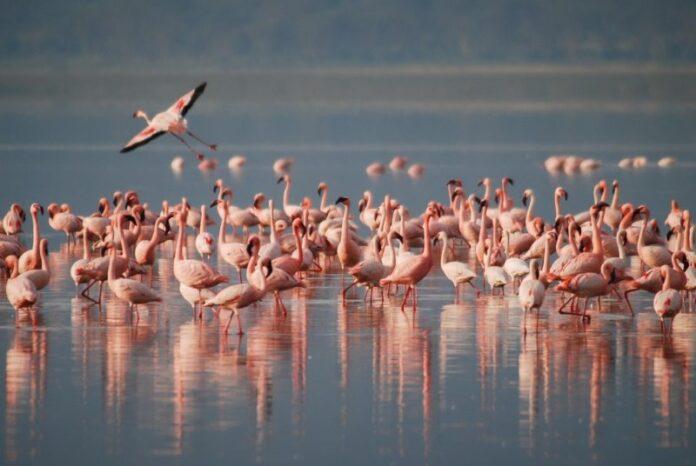 Giornata della biodiversità, tutto il valore delle oasi protette