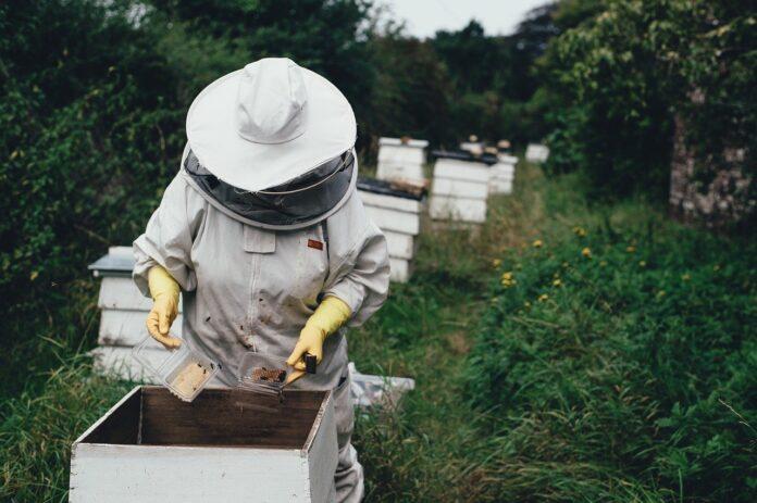 Apiario di Comunità di Castel del Giudice, sostegno finanziario all'apicoltura