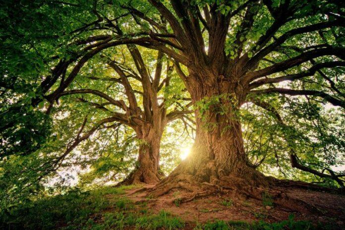 Carbonio, un codice forestale per proteggere gli ecosistemi