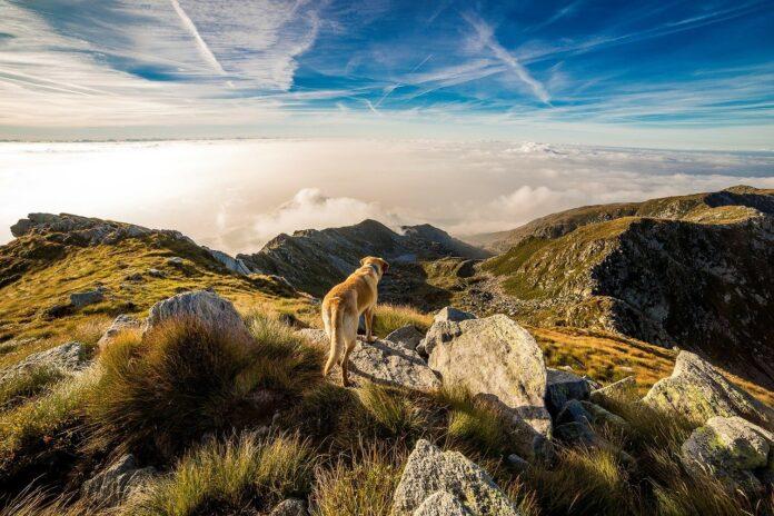 Dog trekking, escursioni in natura con i nostri amici a quattro zampe