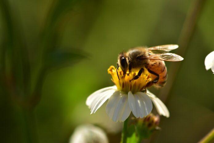 Case per le api su tutti i tetti degli edifici, la proposta del Ministro Costa