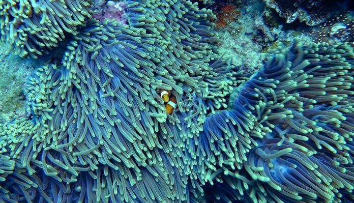 I coralli, importanti accumulatori di inquinanti nell'ambiente marino