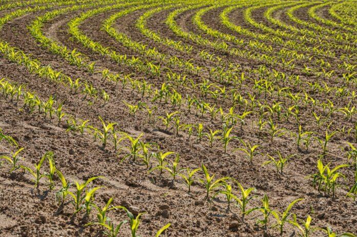 Life ADA, progetto per aumentare la resilienza del settore agricolo ai cambiamenti climatici