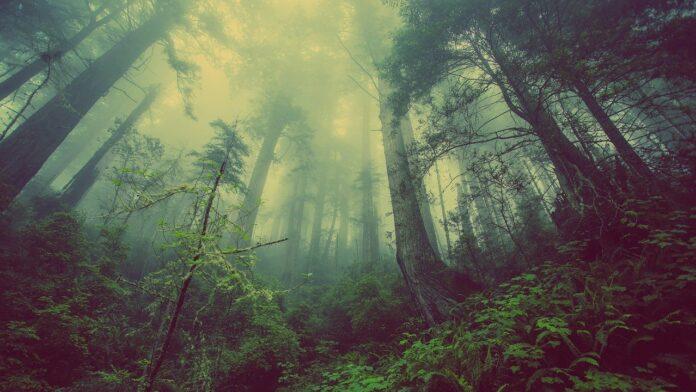 Giornata Nazionale degli Alberi, storie di alberi e di persone che lavorano per tutelarli