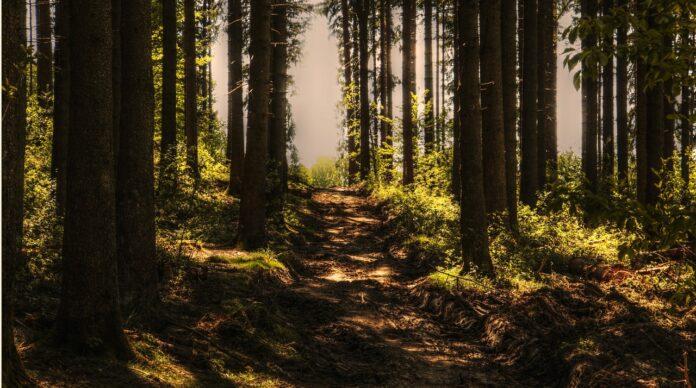 Climi più caldi, le foreste diventano più efficienti ad assorbire carbonio