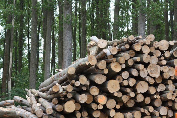 Biomasse e riscaldamento, conoscere per non inquinare
