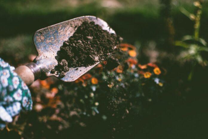 Suolo e biodiversità, risorse preziose da proteggere