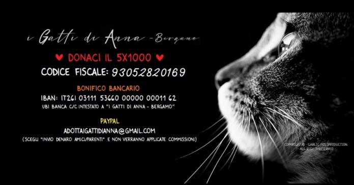 I Gatti di Anna – Bergamo, la generosità che salva