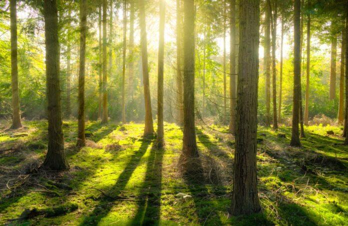 I Boschi della Memoria, in Brasile si pianta un albero per ogni morto per Covid