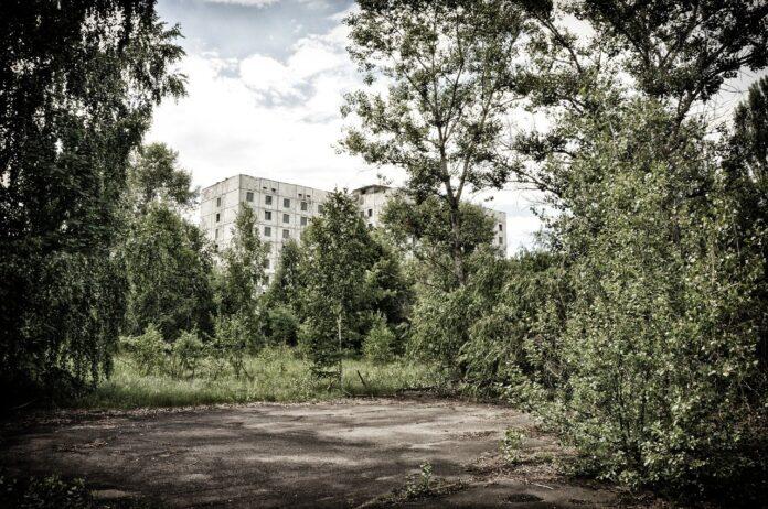 Chernobyl, dopo tanti anni fanno la loro ricomparsa diverse specie animali