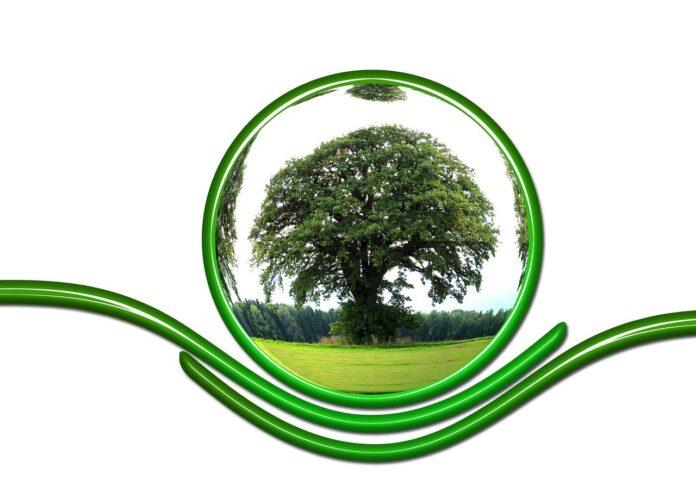 Greenpeace e un mondo nuovo, i 5 buoni propositi per il 2021