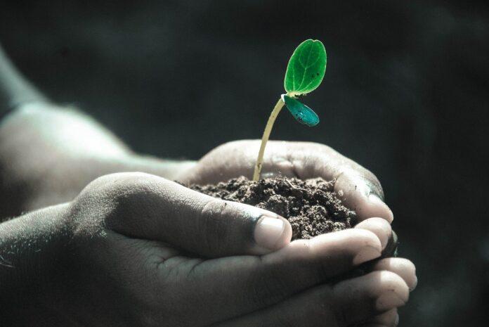 SOMMIT, al via progetto UE per trasformare suolo in serbatoio gas serra