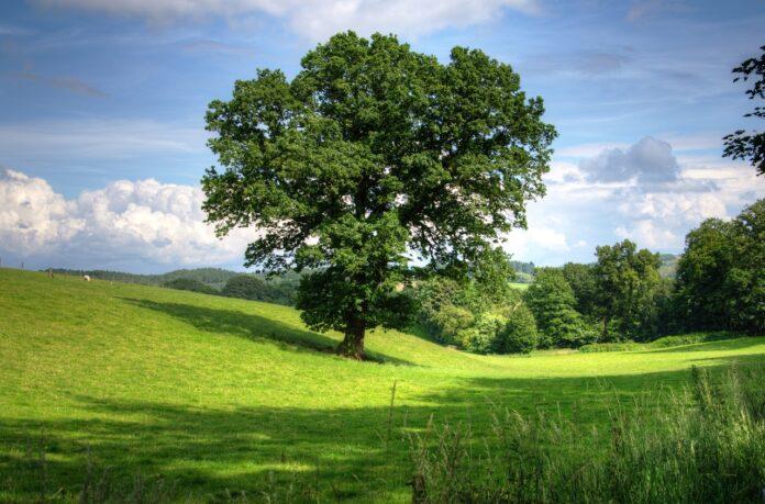 Enea, il progetto della prima Hydrogen Valley italiana