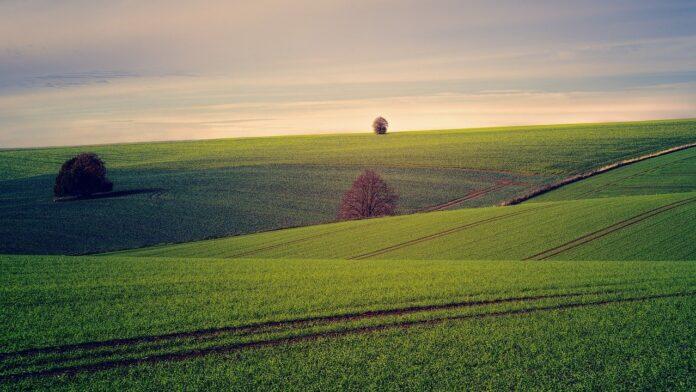 Transizione agroecologica in Chianti, studio su sostenibilità e clima
