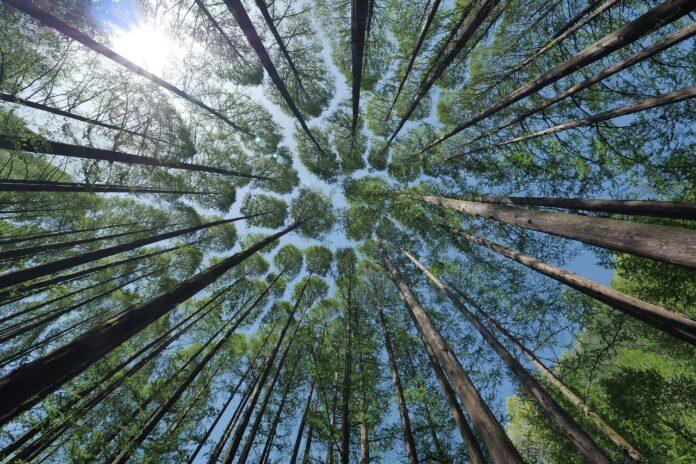 Forestami, il progetto per le foreste in città al servizio della salute