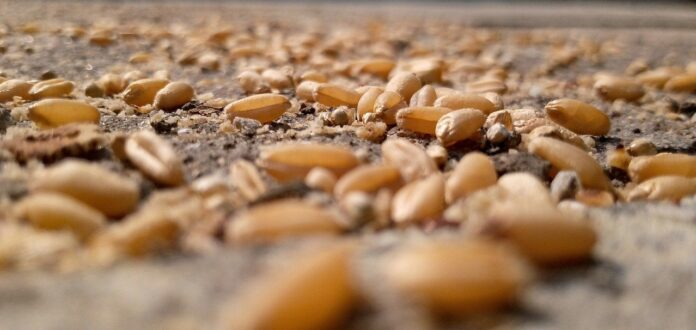 Agroecologia, risposta alla transizione ecologica in agricoltura