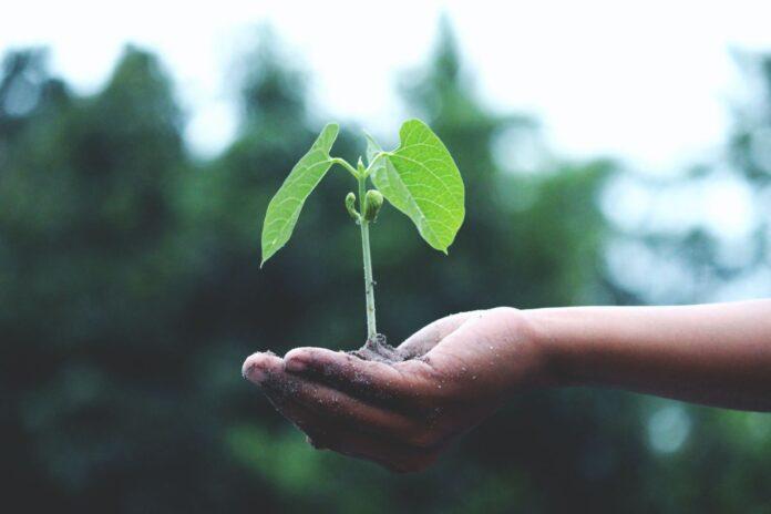 Ecologia integraleed una nuova leadership consapevole e responsabile