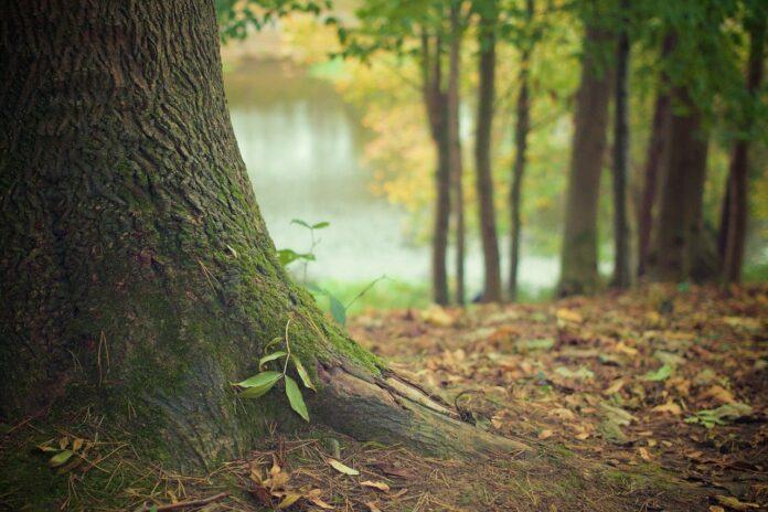 Il Fondo Forestale Italiano ed un bosco che chiede il nostro aiuto