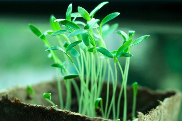 Microbi 'benefici' riparano la Terra in aiuto di agricoltura e ambiente