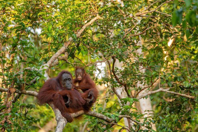 Stop agli oli di palma e di soia per biocarburanti ed elettricità dal 2023