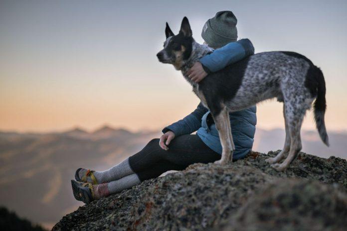Dog Film Festival, raccontare in tre minuti storie d'amore tra umani e cani