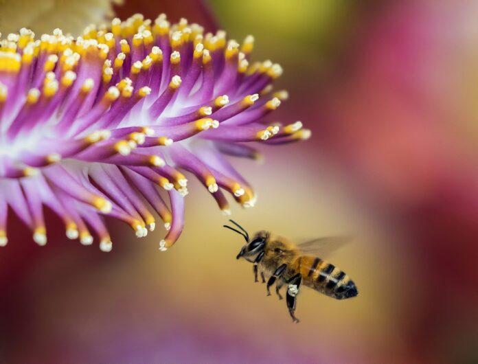 Giornata mondiale delle api e CittàslowBee insieme per le sentinelle della biodiversità